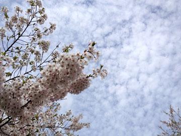 Otaru_20130521tenjyouji1
