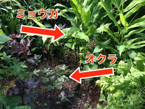 Blog20160810_093432r