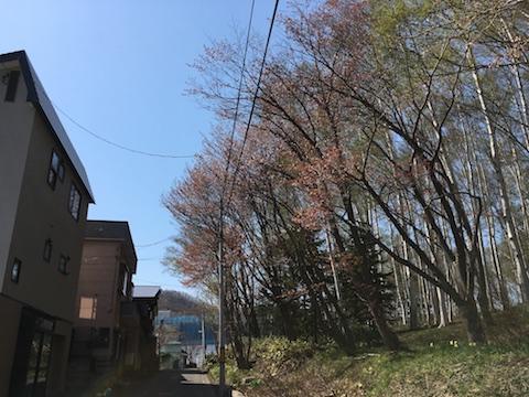 Otaru_20170502_140100